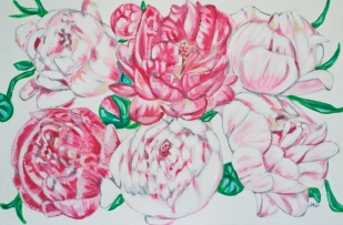 Blushing Peonies, 24 x 36, acrylic on canvas
